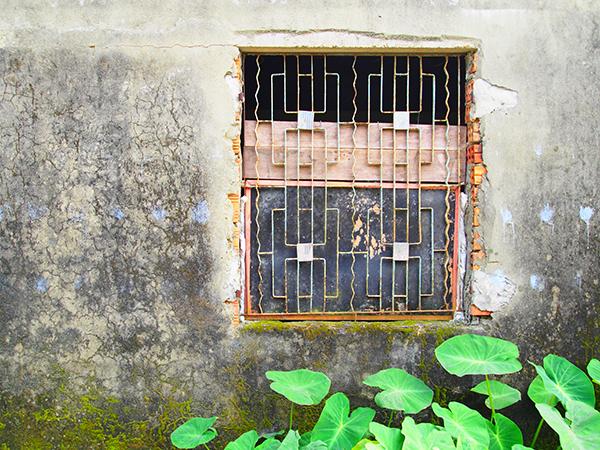 緑の葉っぱと格子の窓