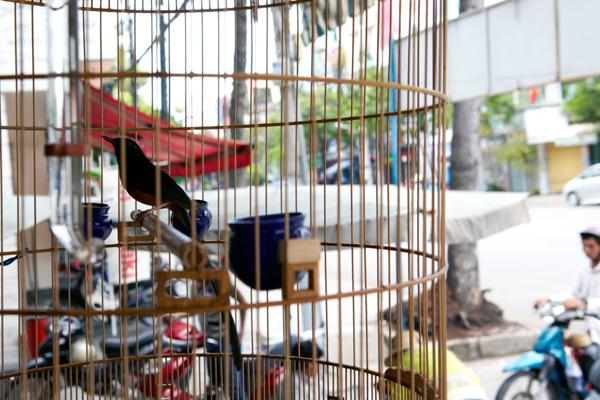 お茶やさんで見た鳥